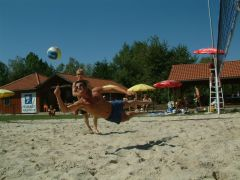 beachvolleyball01.jpg